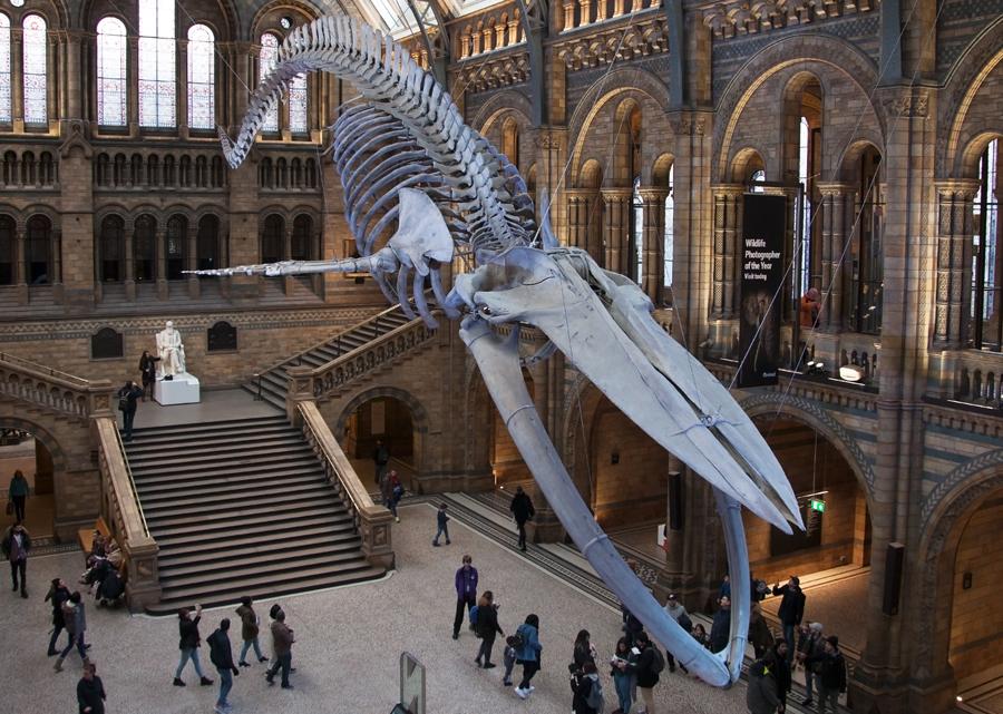 Doğa Tarihi Müzesi - Natural History Museum