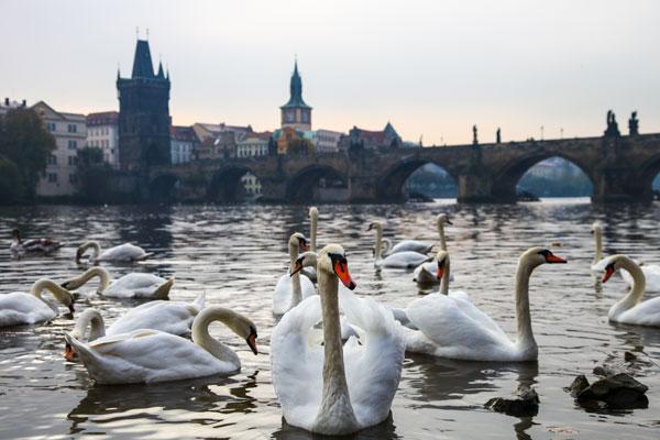 Prag Charles Köprüsü