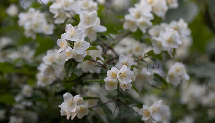 Güzel kokan çiçekler