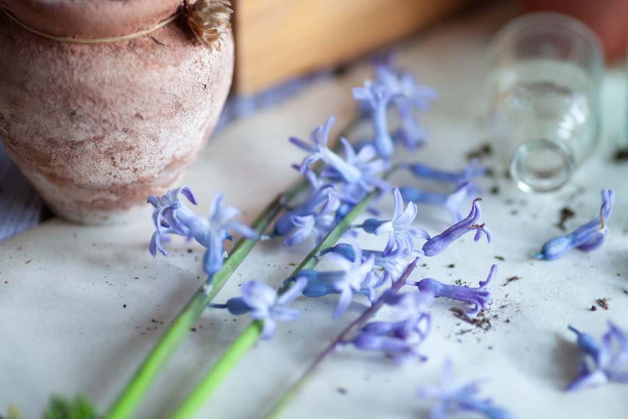Kışın açan çiçekler