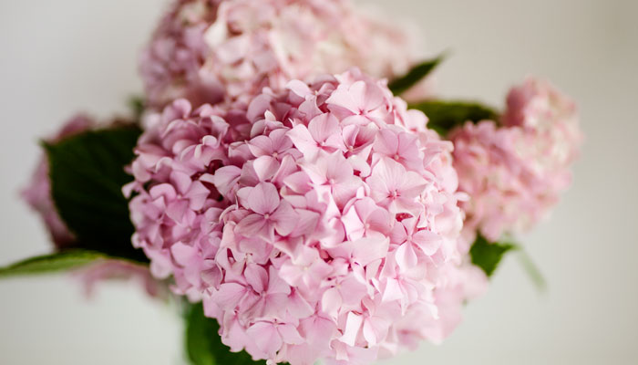 Yaz çiçekleri - Bahçe çiçekleri